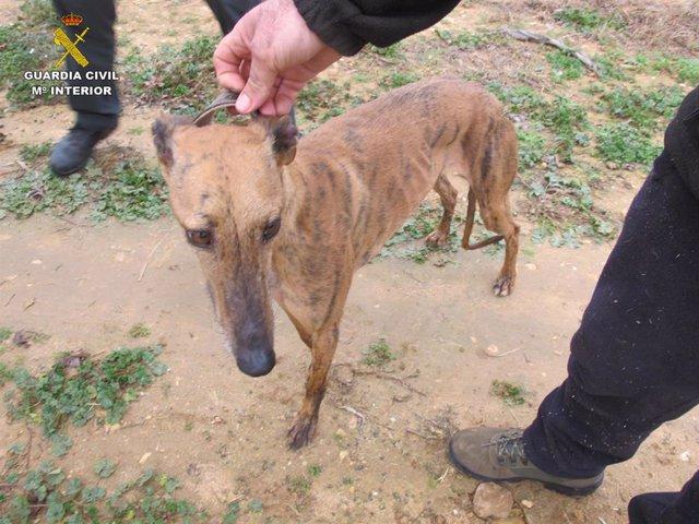 La Guardia Civil detiene a una persona por la sustracción de seis perros