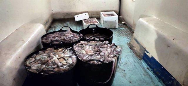 Pulpos inmaduros incautados en Málaga por la inspección pesquera de la Junta y el Seprona de la GC