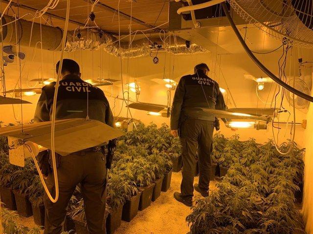 Operación contra el cultivo de marihuana en el área metropolitana de Granada