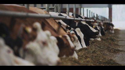 Animalistas protestarán el sábado en Callao para que se prohíba la producción de fuagrás