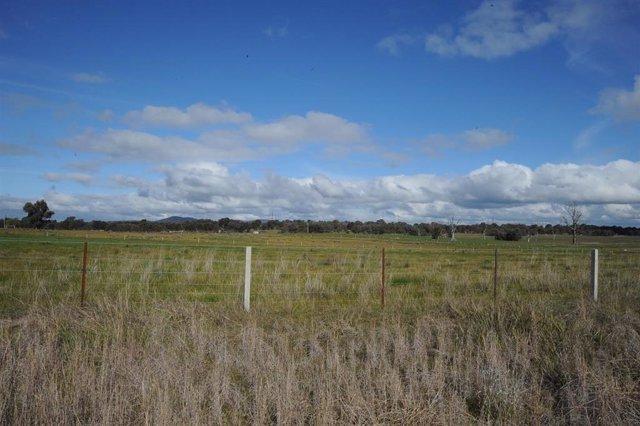 Proyecto solar WInton de FRV en Australia