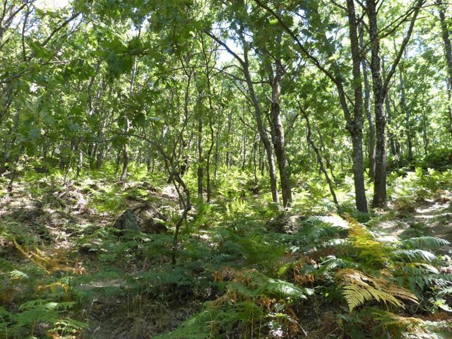Imagen de un bosque