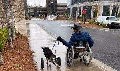 Este perro en silla de ruedas fue devuelto tres veces antes de ser adoptado por un hombre con la misma parálisis