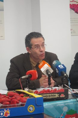 El gerente de Freshuelva, Rafael Domínguez.