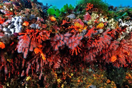 Una nueva investigación detalla la evidencia de la agresión humana a los corales desde hace siglos