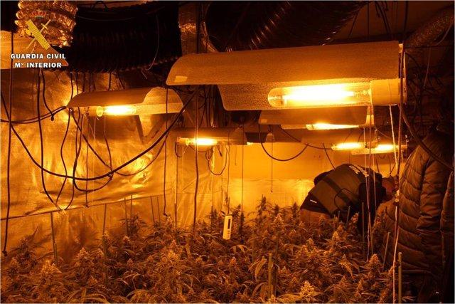 Zaragoza.- Sucesos.- Cinco detenidos por cultivar y vender marihuana en Muel, Ca