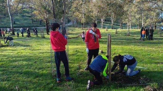 Voluntarios plantan árboles en la comarca del Ambroz
