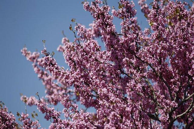 Buen tiempo, clima, altas temperaturas, temperatura, primavera, primaveral, flor, flores