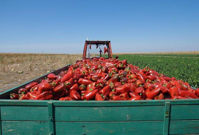 Almería.-Junta abre seis expedientes por reetiquetado de productos agrícolas tra
