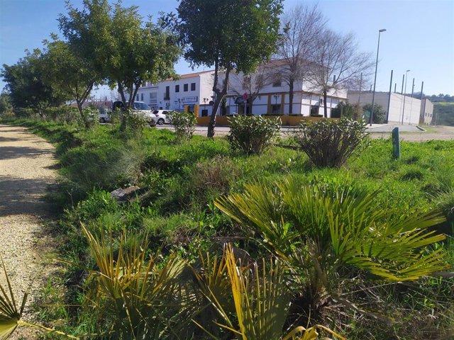 Zona donde está prevista la plantación
