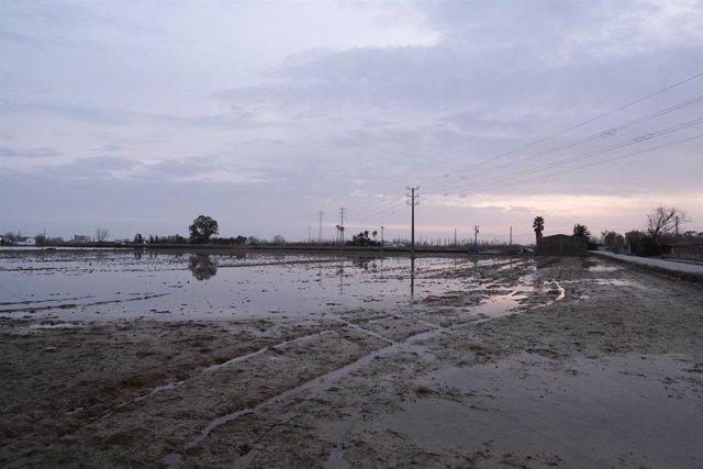 Zona propera a Riumar (Tarragona), al delta de l'Ebre, inundada por la borrasca Gloria.