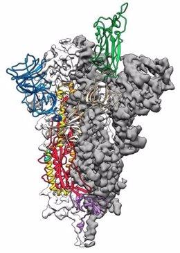 Este es un mapa a escala atómica en 3D, o estructura molecular, de la proteína 'espiga' del Covid-19.