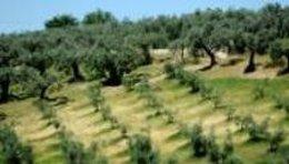 Una delegación de Parlamento Europeo visita la próxima semana Extremadura para c