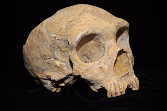 Cráneo de humano antiguo
