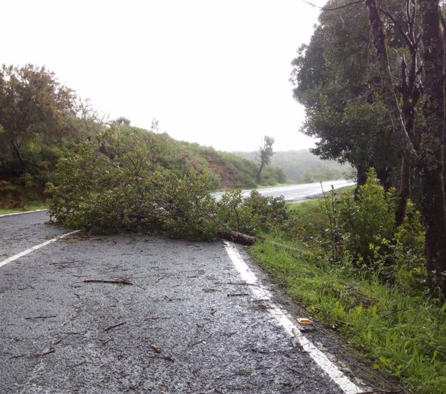 Daños causados por un temporal de viento en la isla de La Gomera