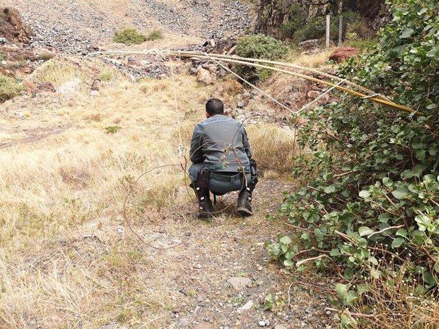 Un agente del Seprona comprueba la zona donde fueron colocados los lazos