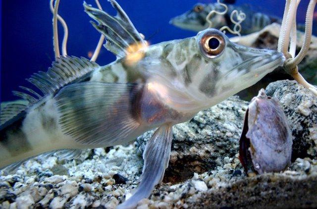 Especies marinas en el Oceáno.