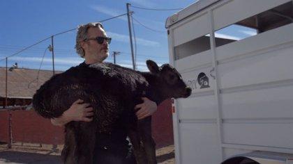 VÍDEO: Joaquin Phoenix salva a una vaca y su cría de un matadero