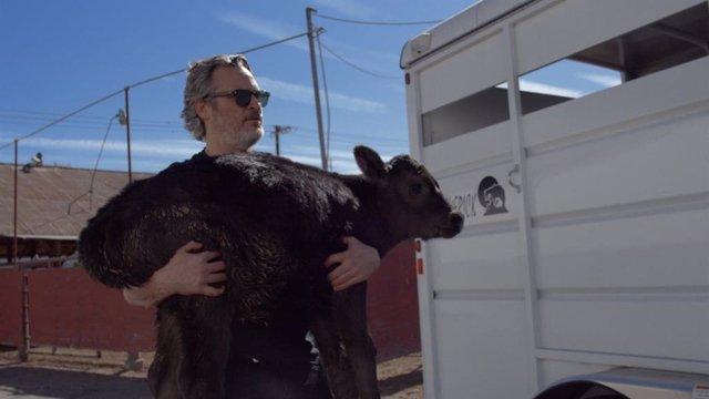Joaquin Phoenix salva una vaca del matadero