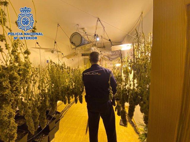 Agente de la Policía Nacional en la plantación de marihuana localizada en El Ejido
