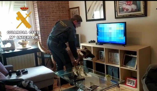 Un agente de la Guardia Civil registra el domicilio con un perro especializado en encontrar droga.