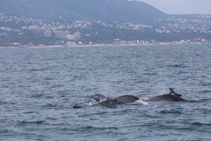 Bruselas urge a España y otros 21 países a atajar la pesca accidental de delfines en aguas europeas