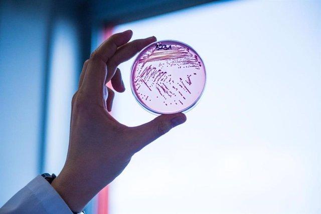 Bacteria E. Coli resistente a múltiples fármacos