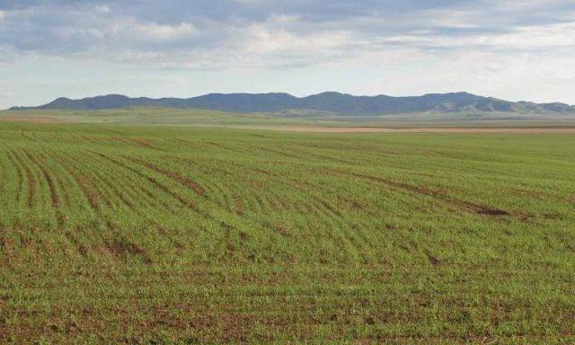 Tierra cultivada en el norte de Mongolia