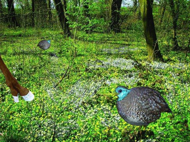 Reconstrucción gráfica del hábitat de un nuevo pangalliforme del Eoceno medio de pequeño tamaño descubierto en la Cuenca de Uinta