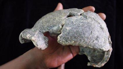 Homo erectus usó diversidad de técnicas para fabricar herramientas