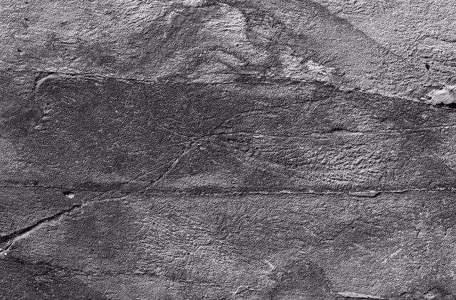 Una red social funcionó en los primeros animales hace 500 millones de años