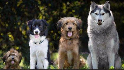 Altos niveles de ansiedad por el ruido en los perros de ciudad