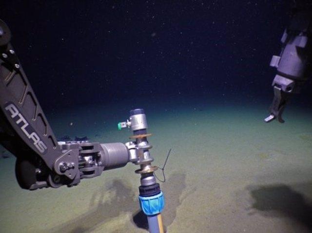 La bacteria de la clamidia prospera en soledad en el fondo del Ártico