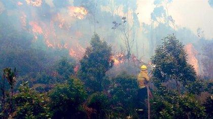 Colombia.- Los incendios y las altas temperaturas ponen en tela de juicio la calidad del aire en Bogotá