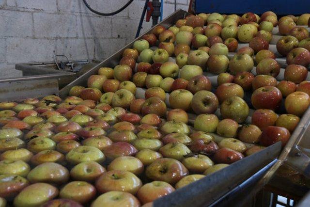 Algunes de les pomes recollides el setembre passat i que estan a punt de ser comercialitzades des de l'Armentera aquest dijous 27 de febrer de 2020. (Horitzontal)