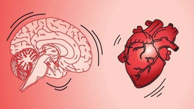 El cerebro se sacude cuando el corazón late.