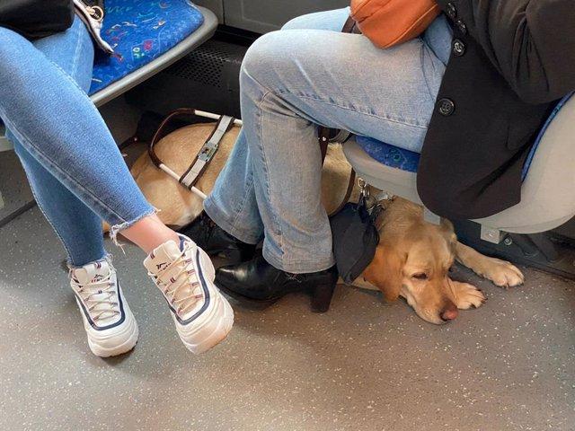 Perro de asistencia en un autobús en Oviedo.