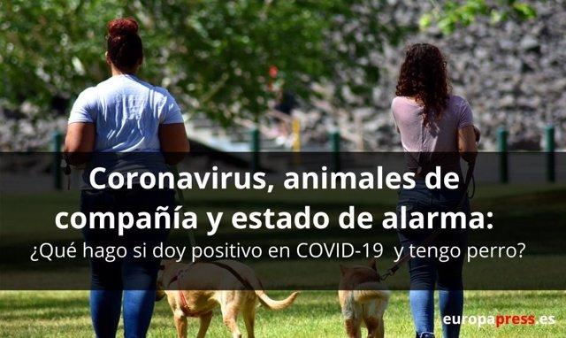 Coronavirus, animales de compañía y estado de alarma