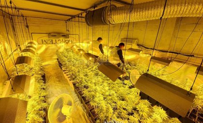 Dos detenidos y casi 400 plantas de marihuana intervenidas en la nave de un polígono de Sevilla