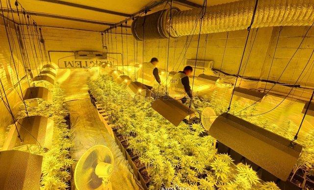 Plantación de marihuana intervenida en la nave de un polígono industrial de Sevilla.