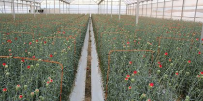 """El sector de la flor y planta reclama un Real Decreto que evite """"un desastre económico"""""""
