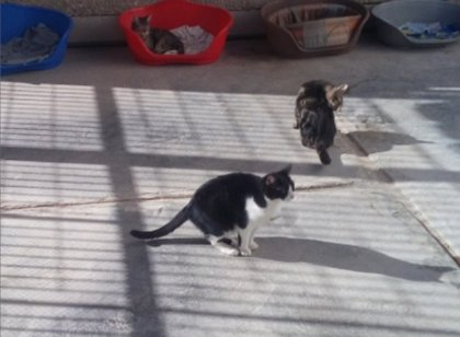El refugio de Benimàmet mantiene el cuidado de animales y se puede seguir alimentando a las colonias felinas