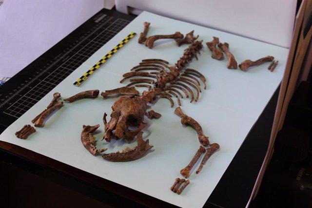Los romanos ya tenían perros miniatura como mascotas