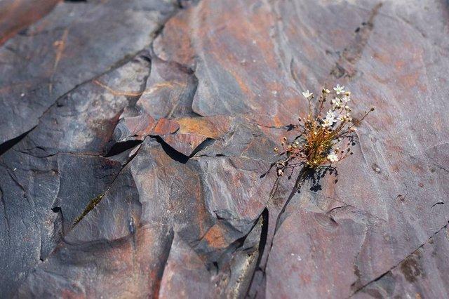 Una roca desafía la teoría de la escasez de oxígeno en la Tierra primitiva