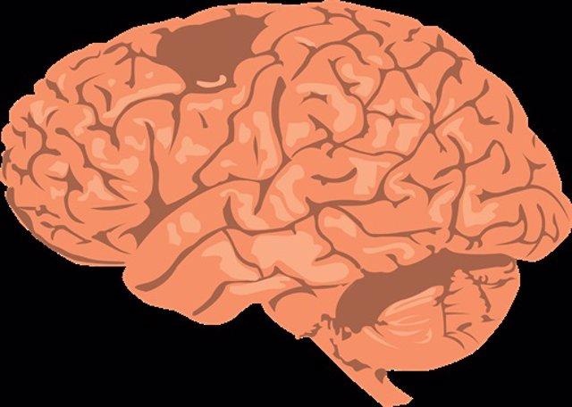 El 'sistema GPS' del cerebro alterna entre las rutas presentes y futuras posible