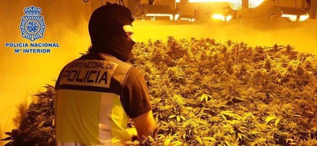Marihuana intervenida en un cortijo ubicado en el paraje La Juaida de Almería