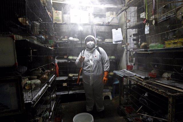 Un operario desinfecta una tineda de mascotas de Bangkok, Tailandia.