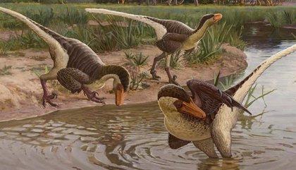 Nuevo dinosaurio emplumado, uno de los últimos raptores sobre la Tierra