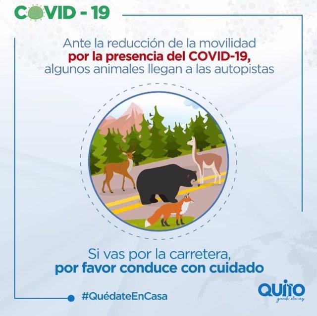 Anuncio del Municipio de Quito alertando de la mayor presencia de animales salvajes por las calles y carreteras de la capital ecuatoriana debido a la ausencia de personas motivada por la cuarentena decretada para frenar la expansión del Covid-19.