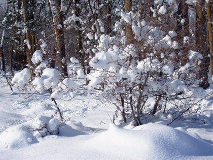 Alertan de nevadas a 800 metros este domingo y a 300 metros el próximo lunes en el interior de Euskadi